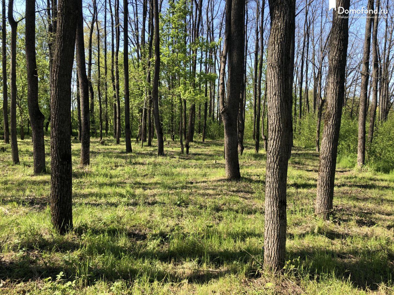краснодар лесопарк хомуты фото картинки, которых